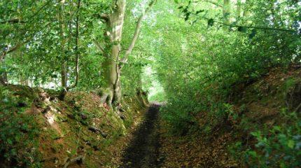 Sunken path going downhill, Seal