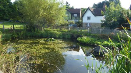 The pond at Godden Green